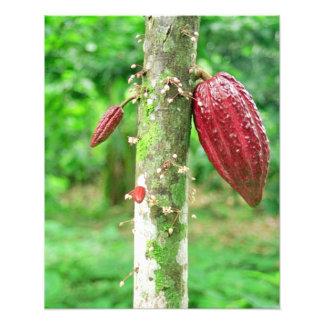 Cocoa tree photographic print