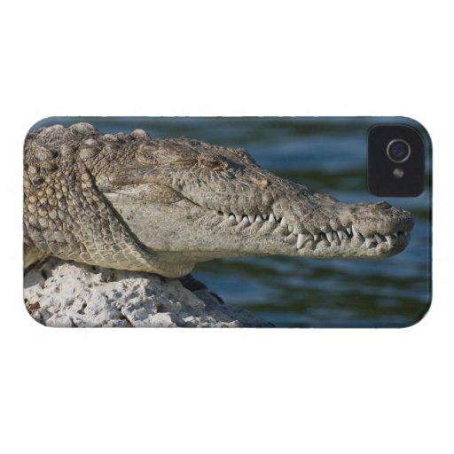 Cocodrilo americano iPhone 4 Case-Mate carcasas
