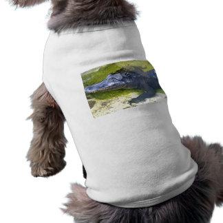 Cocodrilo americano ropa para mascota