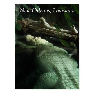 Cocodrilo blanco de Luisiana Tarjetas Postales