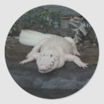 cocodrilo blanco etiqueta