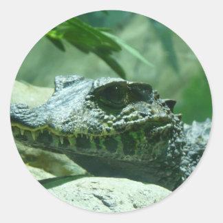 cocodrilo, caiman pegatina redonda