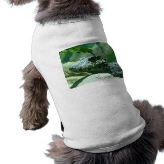 cocodrilo, caiman camisa de perro