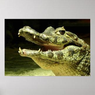 Cocodrilo, Crocodile/ Póster