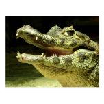 Cocodrilo, Crocodile/ Tarjetas Postales