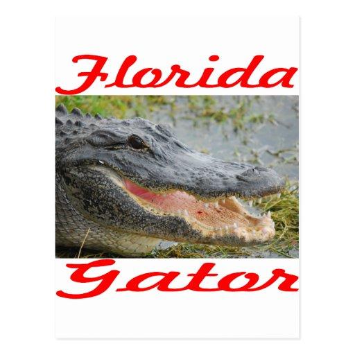 Cocodrilo de la Florida Postal