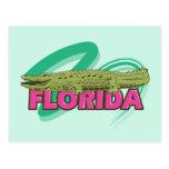Cocodrilo de la Florida Tarjetas Postales