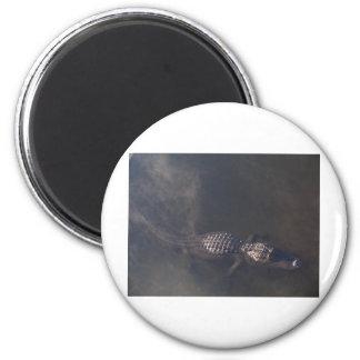 Cocodrilo de la natación imán redondo 5 cm