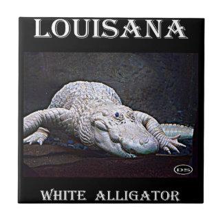 Cocodrilo del blanco de Luisiana