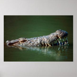 Cocodrilo del Nilo (Crocodylus Niloticus) 2 Póster