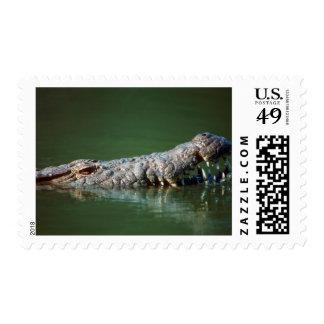 Cocodrilo del Nilo (Crocodylus Niloticus) Sellos