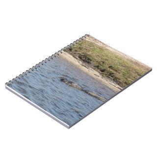 Cocodrilo en el cuaderno del agua