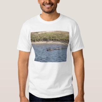 Cocodrilo en la camisa del agua