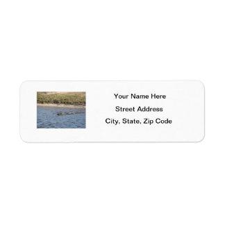 Cocodrilo en la etiqueta de Avery del agua Etiquetas De Remite