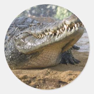 cocodrilo etiqueta