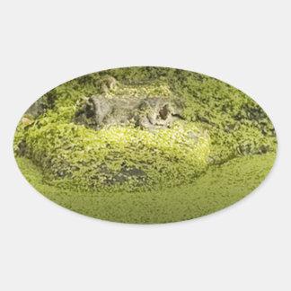 Cocodrilo que está al acecho en la lenteja de agua pegatina ovalada