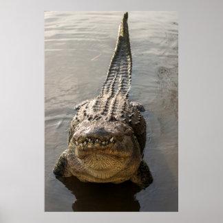 Cocodrilo que hace danza del agua en Gatorland Póster