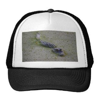 Cocodrilo que se arrastra para arriba gorras de camionero