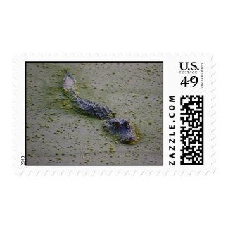 Cocodrilo que se arrastra para arriba sello