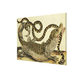 Cocodrilo y serpiente, 1730 (grabado coloreado) impresion en lona