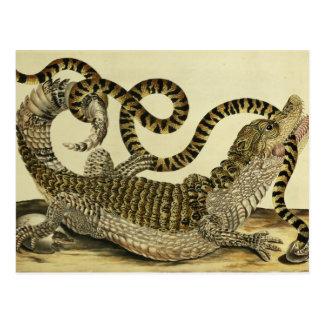 Cocodrilo y serpiente, 1730 (grabado coloreado) postales