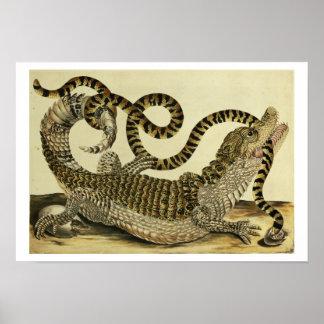 Cocodrilo y serpiente, 1730 (grabado coloreado) póster