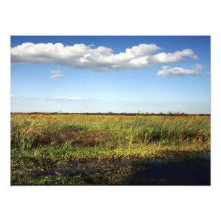 Cocodrilo y terreno de aluvión. Condado de Orange, Impresiones Fotográficas