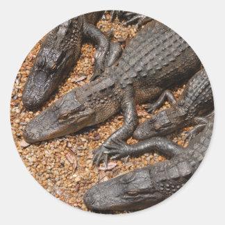 cocodrilos pegatinas redondas