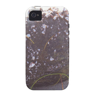 coconut vibe iPhone 4 cases
