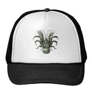 Coconut Crab Mesh Hat