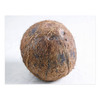Coconut For use in USA only.) Postcard