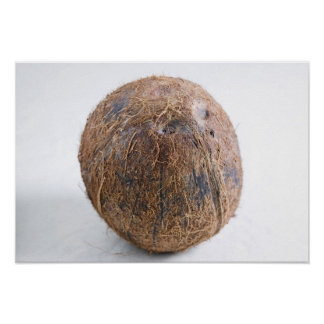 Coconut For use in USA only.) Poster