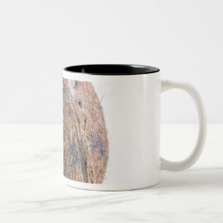 Coconut For use in USA only.) Two-Tone Coffee Mug