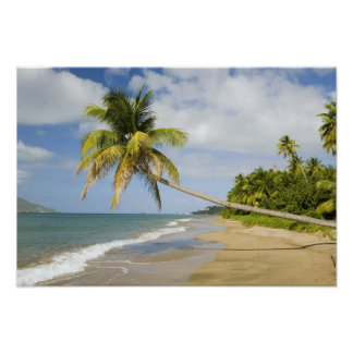 Coconut Grove Beach at Cades Bay, with St. 2 Poster