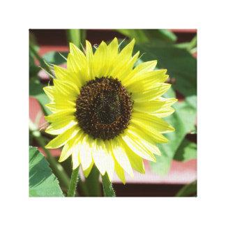 Coconut Ice Sunflower Canvas Photography Print