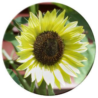 Coconut Ice Sunflower Decorative Plate