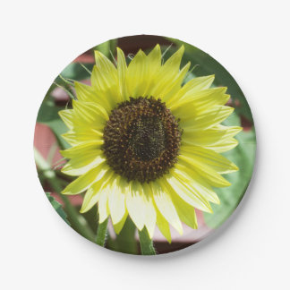 Coconut Ice Sunflower Paper Plates