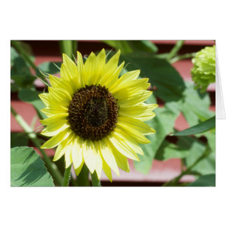 Coconut Ice White Sunflower Greeting Card