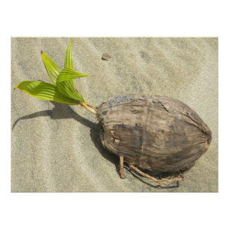 Coconut On Sand Poster