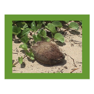 Coconut on the Beach Postcard