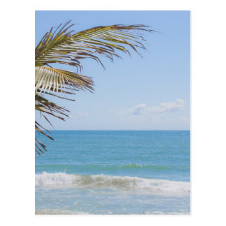 Coconut Palm and Blue Sea Beach Photography Postcard