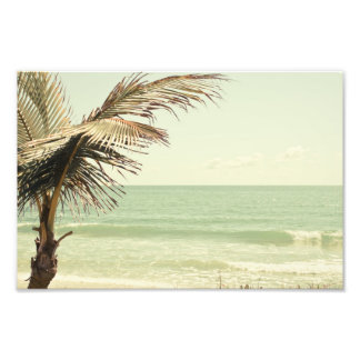 Coconut Palm and Pastel Beach Photography Photograph