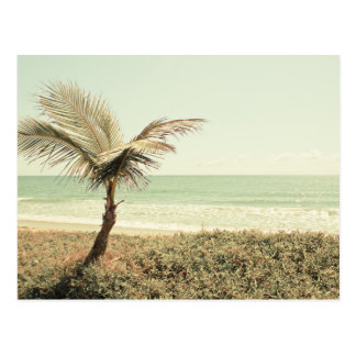 Coconut Palm and Pastel Beach Photography Postcard
