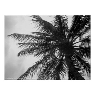 Coconut Palm Poster