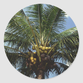 Coconut Palm Tree Classic Round Sticker