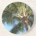 Coconut Palm Tree Drink Coaster