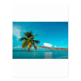 Coconut palm tree on tropical paradise beach postcard