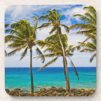 Coconut palm trees (Cocos nucifera) swaying in Coasters