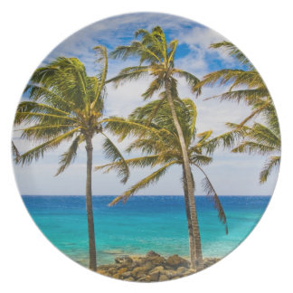 Coconut palm trees (Cocos nucifera) swaying in Plate