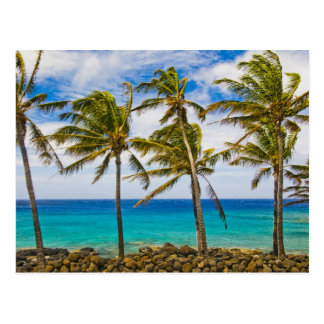 Coconut palm trees (Cocos nucifera) swaying in Postcard